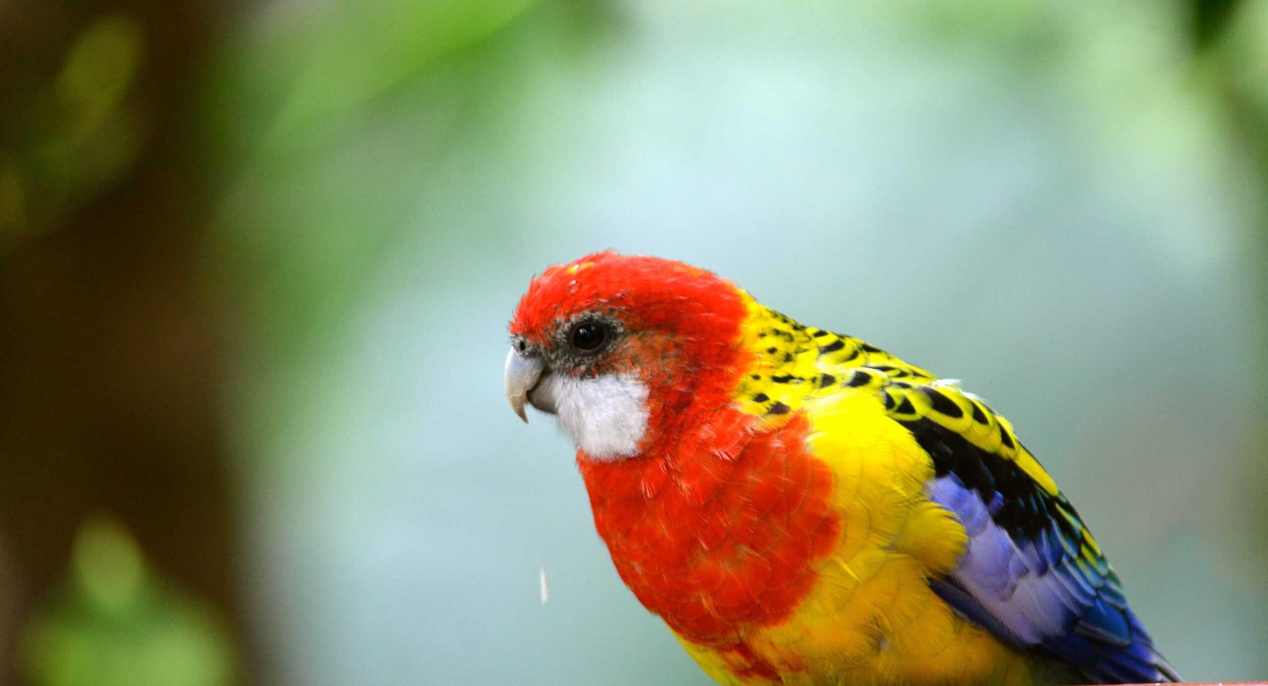 la perle aux oiseaux